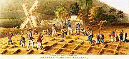 Plantación de azúcar, Haití