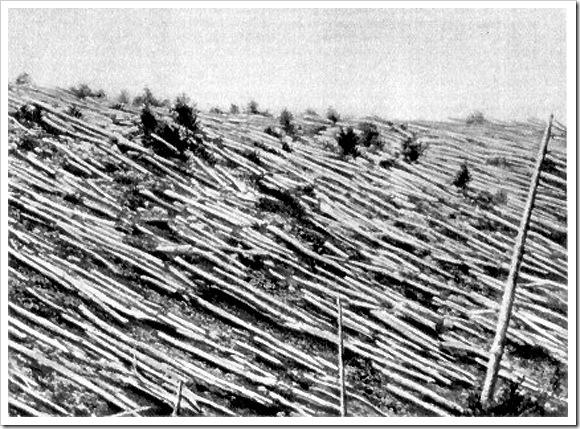 Bosque devastado en Tunguska
